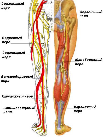 Сильная боль в левой ноге причины thumbnail