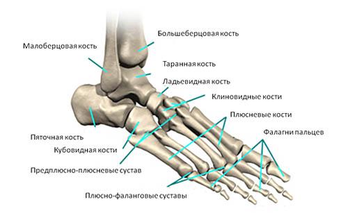 разделяю Ваше болят кости ног лечение такое явно